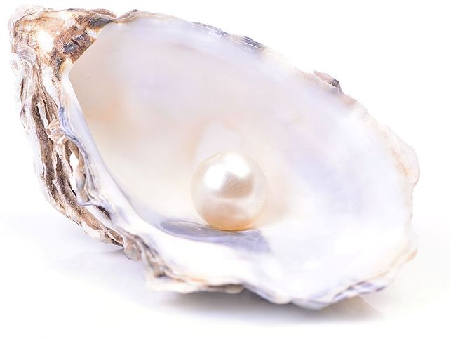 Junes birthstone pearl in displayed in a shell.
